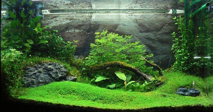 plantas acuáticas para acuarios