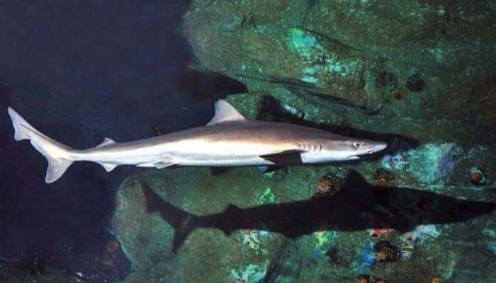 Tiburón en su hábitat